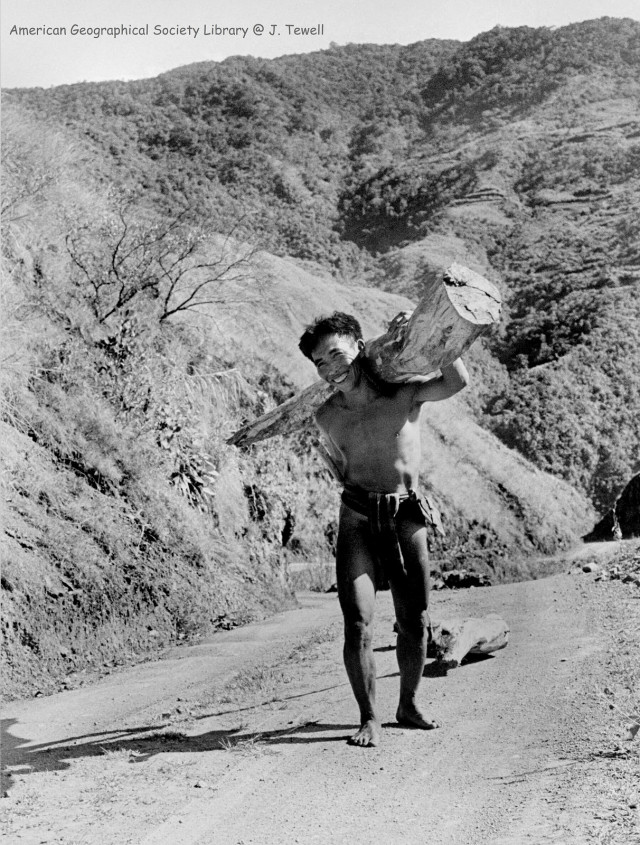 Igorot man carrying a log and pulling a log behind him with a rope.